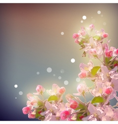 Shining Cherry blossom background vector image vector image