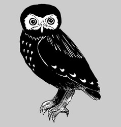 hand drawn doodle of the owl vector image