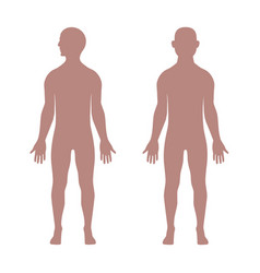 Male anatomical shape vector