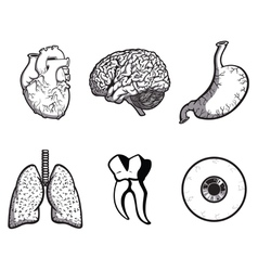random body parts vector image