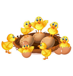 many chicks and eggs in nest vector image