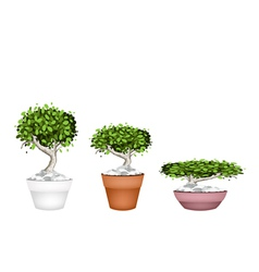 Set of bonsai tree in ceramic pots vector