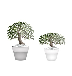 Two beautiful bonsai tree in a flower pot vector