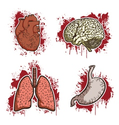 Cartoon human organs vector