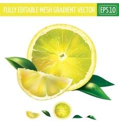 Lemon on white background vector