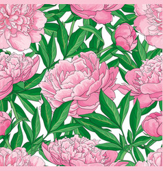 Hand drawn peony seamless pattern vector