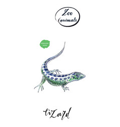 lizard gecko in watercolor vector image vector image