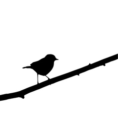 robin vector image vector image