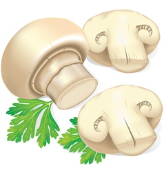 Field mushrooms and parsley vector image vector image
