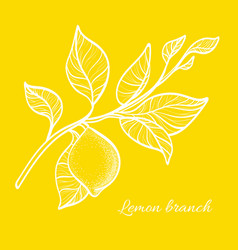 Lemon branch yellow vector