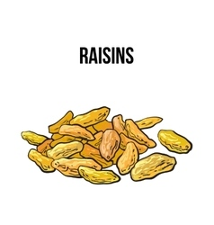 Pile of dried raisins sketch style hand drawn vector