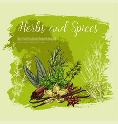 poster of spices and herbal seasonings vector image vector image