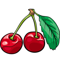Cherry fruits cartoon vector
