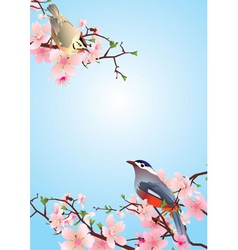 On the blossoming cherry detailedvector vector