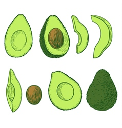 avocado set vector image vector image