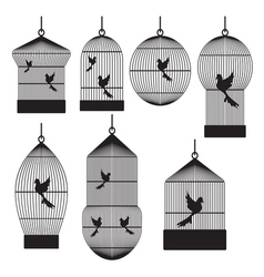 Birds in cages vector image