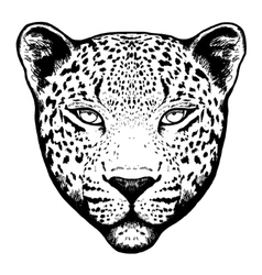 Graphical leopard head - vector