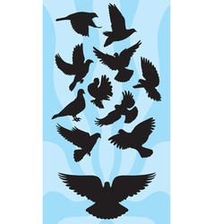 Pigeon silhouettes vector