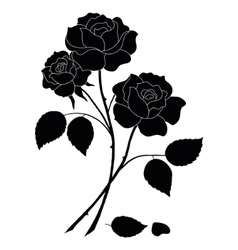 Flowers rose silhouette vector