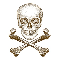 Engraving skull and bones vector