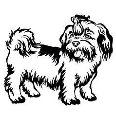 Decorative standing portrait of dog shih-tzu vector