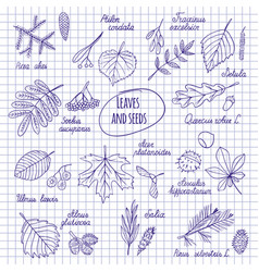 Leaves and seeds of trees vector