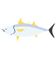 Sea fish tuna vector image