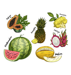 Set of isolated sketch of tropical fruits vector