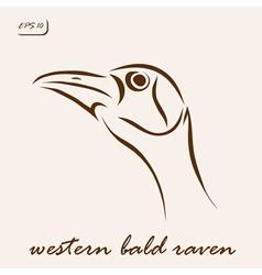 Western bald raven vector