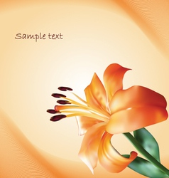 background with lily vector image