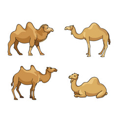 camels in cartoon style with outlines vector image vector image