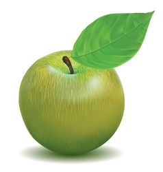 Ripe apple green color vector