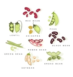 Bean cultures with names set vector