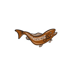 Brown spotted trout jumping cartoon vector