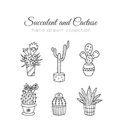 Cactus succulent and cacti vector image vector image
