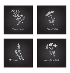 Handdrawn medicinal herbs - health and nature set vector