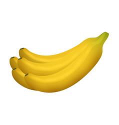 ripe yellow banana fruits realistic juicy healthy vector image vector image