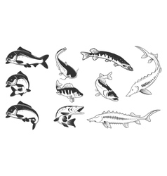Set of river fish marks River carp vector image