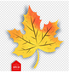Autumn maple leaf on transparency background vector