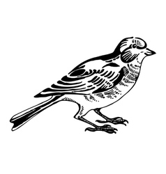 linnet bird sketch drawing vector image