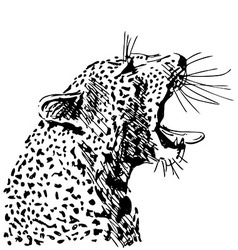 Hand sketch of the head of a roaring leopard vector