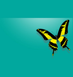 butterfly with black wings yellow patterns vector image vector image