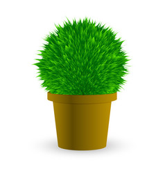 cactus in a pot on white vector image