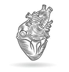 Button or icon of a human heart vector