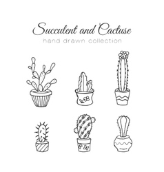 Cactus succulent and cacti vector