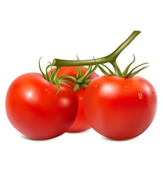 Ripe tomatoes branch with water drops vector image