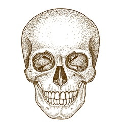 Engraving skull vector
