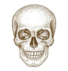 Engraving skull vector