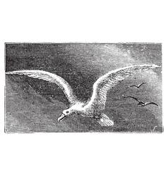 Wandering albatross engraving vector