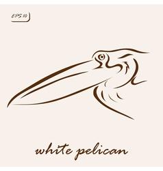 White pelican vector